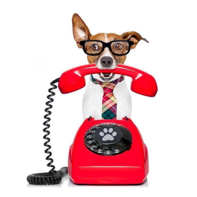 Brand voice - Dog answering phone